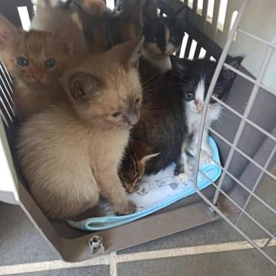gatitos en transportadora