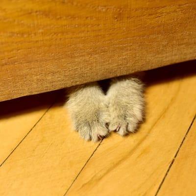 patas de gato en la puerta