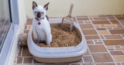 gato arena ecologica