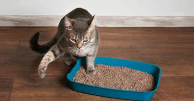 gato como hacer arena