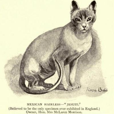 raffigurazione di un gatto azteco