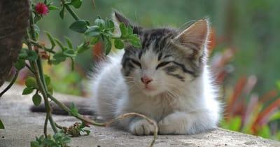 gato ojos cerrados