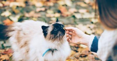 gato come galleta