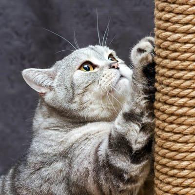 gato usa rascador