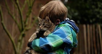 niño abraza gato