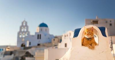 gato isla griega