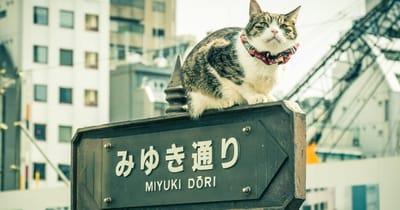 nombre gato japones