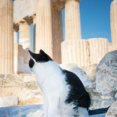gato en acropolis