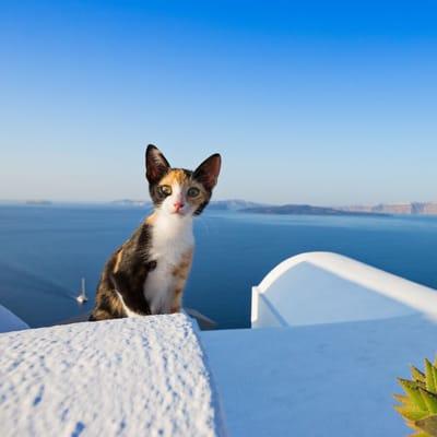 gata isla griega