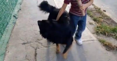 perrito y niño