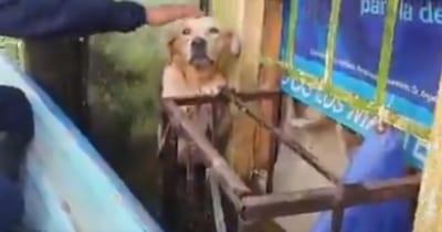 perrito rescatado