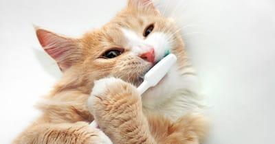 gato climpiar dientes
