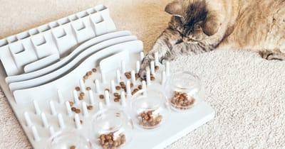 gato laberinto comida