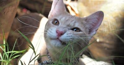 gato vomita diario