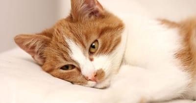gato amarillo enfermo
