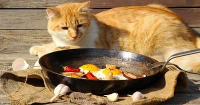 gato observa sartén con huevos