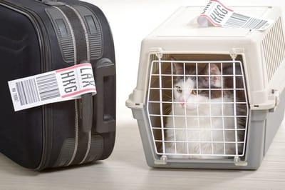 Gato en transportadora