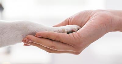 pata de perro y mano humana