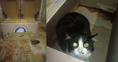 gato caja cartón