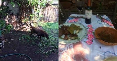 perro jardín comida