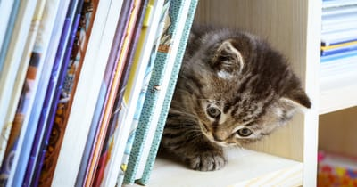 gatito en librero
