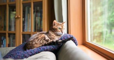 gato viendo por la ventana
