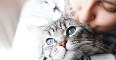 beso gato gris
