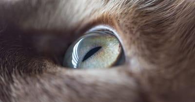 ojo de gato closeup