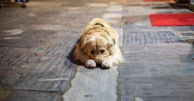 perro abandonado en la calle