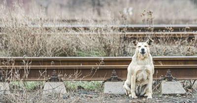perro vías del tren