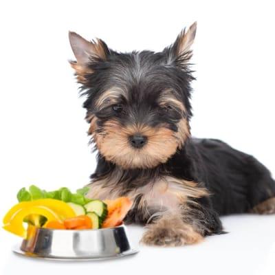 perro come verduras
