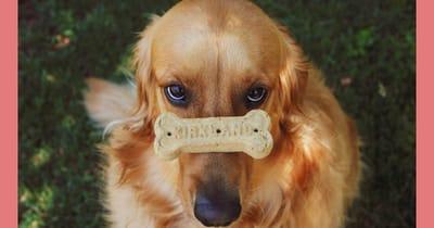 perro golden hueso