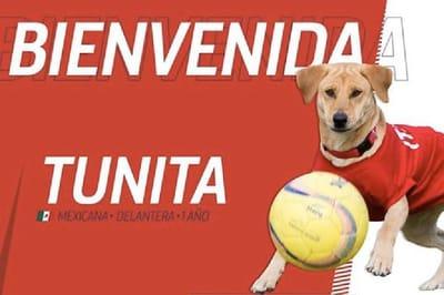 Tunita es el refuerzo más perrón del Club Atlético de San Luis Foto: Twitter /@atletidesanluis