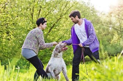 Las relaciones tóxicas también afectan a las mascotas Foto: Shutterstock