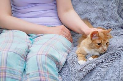 acariciando a un gato