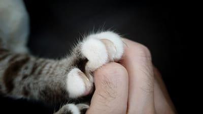 garra gato mano humana