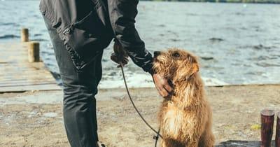 perro amigo hombre