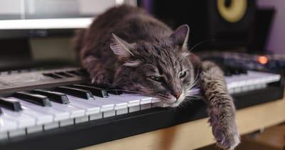 gato toca piano