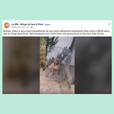 jaula abandonada perro