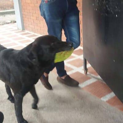 perro paga con hojas