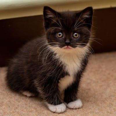 gatito calcetines blancos
