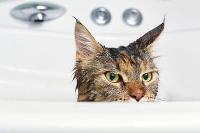 el baño de tu gato