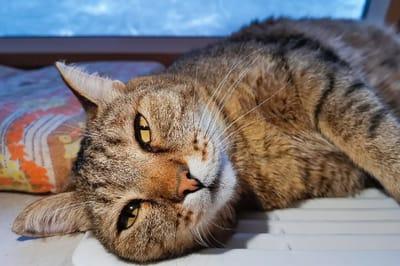 movimientos exoticos en gatas enc elo
