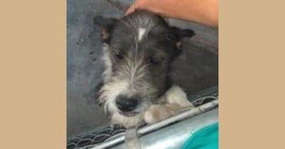 perrito adopción