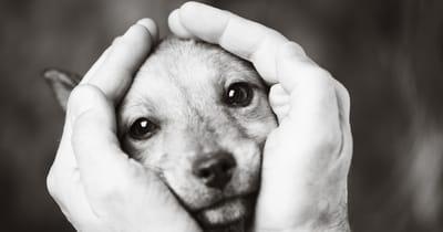 perro manos humanas