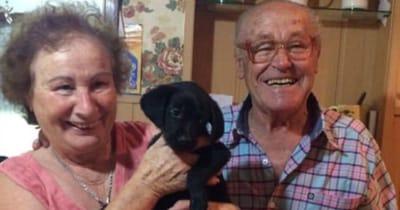 perrito con ancianos