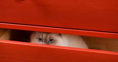 gato escondido cajón