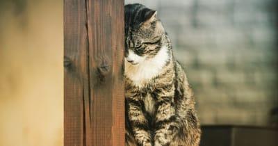 gato recargado en poste