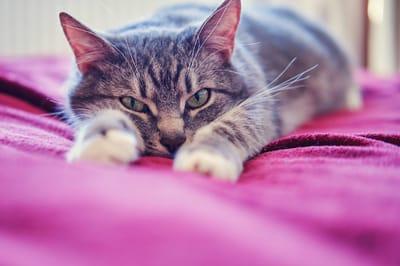gato enojado cama