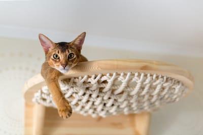 gato trepado en repisa